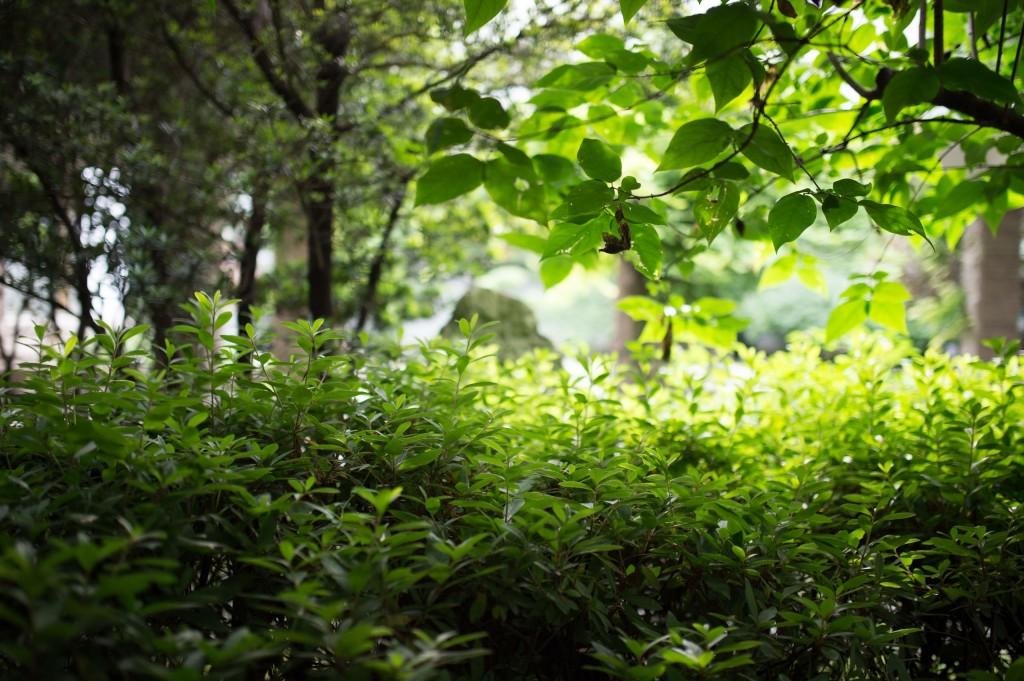 魯迅公園99