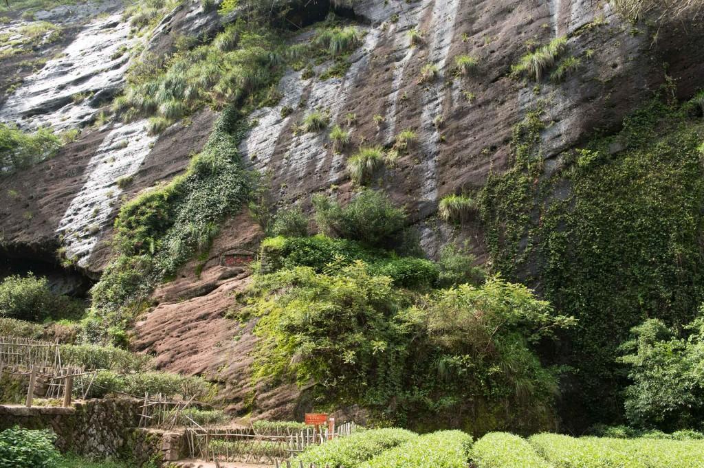 大红袍を栽培する場所